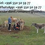 Guide, driver in Kyrgyzstan, tourism, travel, excursions, hiking in mountains
